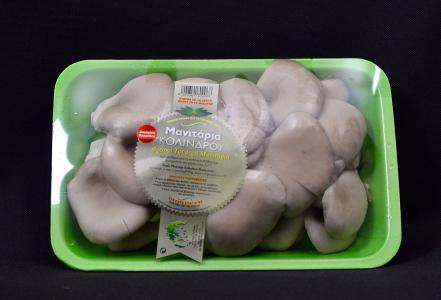 Fresh pleurotus mushrooms 500gr